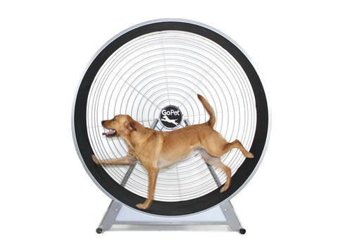 GoPet CS6020 Medium-Large Breed Dog TreadWheel