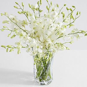 White Dendrobium Birthday Orchids