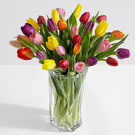 30 Multi-Colored Tulips