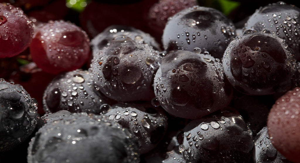 From Grapes to Glass: An Essential Guide to Viniculture