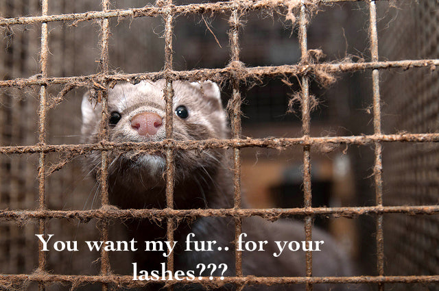 Myths of the 'cruelty free' mink industry – What they DON'T want you to know.