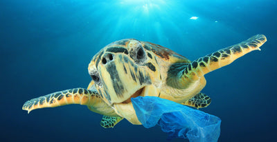 Join us in supporting 4Ocean and help to clean the oceans from plastic featured image