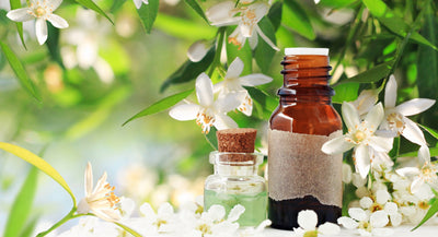 Neroli - The Goddess of Essential Oils featured image