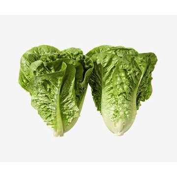 Baby Cos Lettuce (Twin Pack)