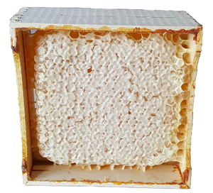 Section Honey Comb