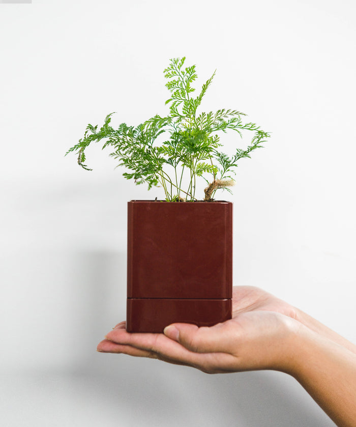 Square Planter - Brick
