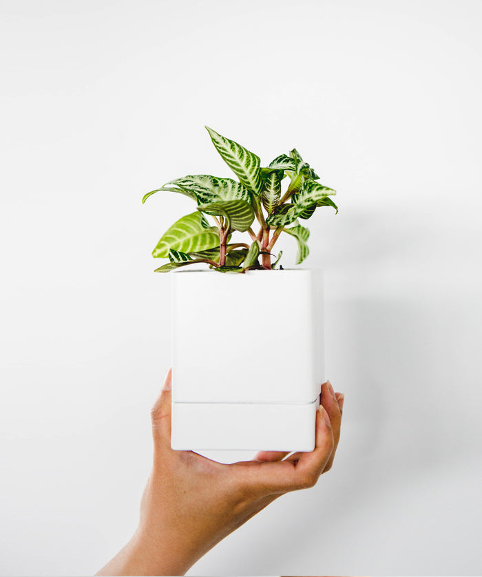 Square Planter - White