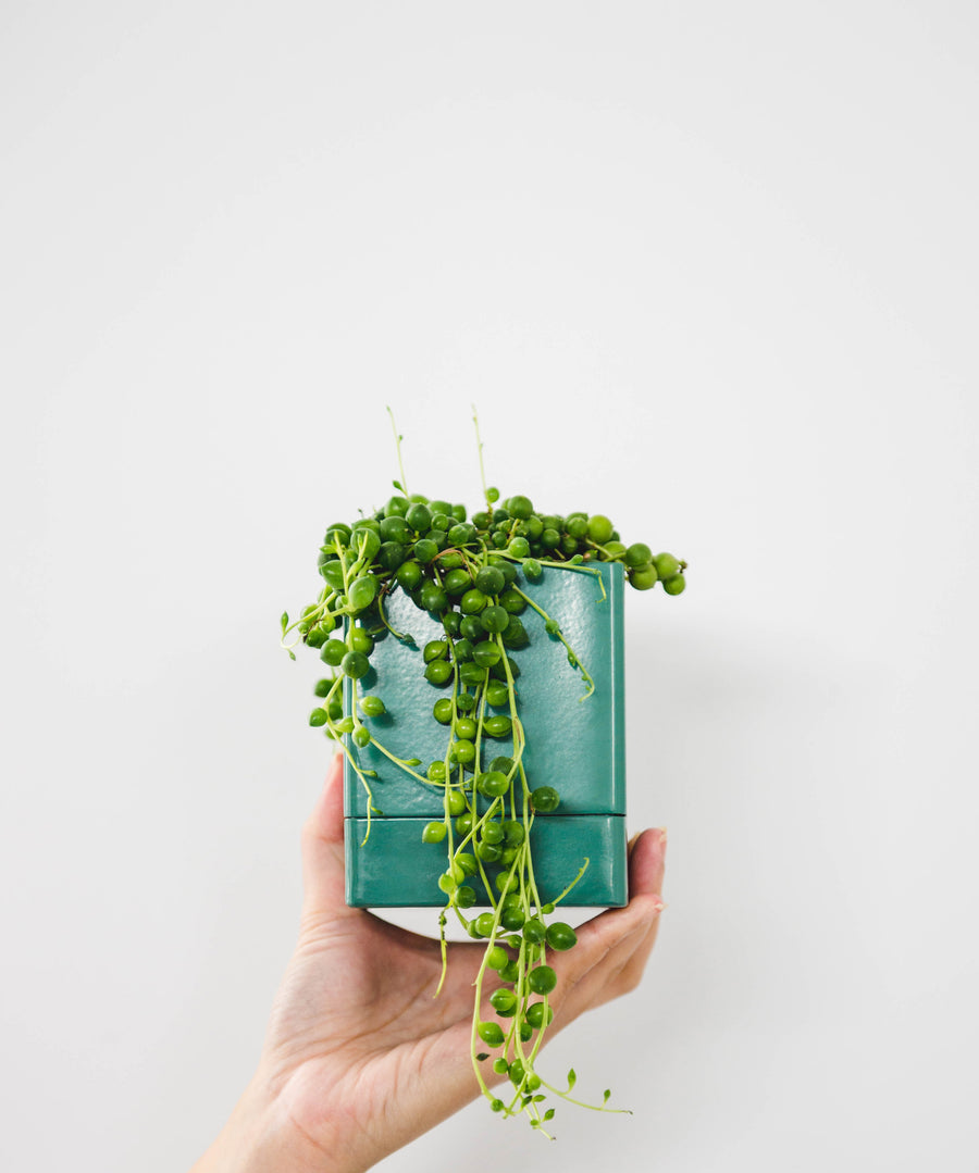 Square Planter - Eucalyptus Green