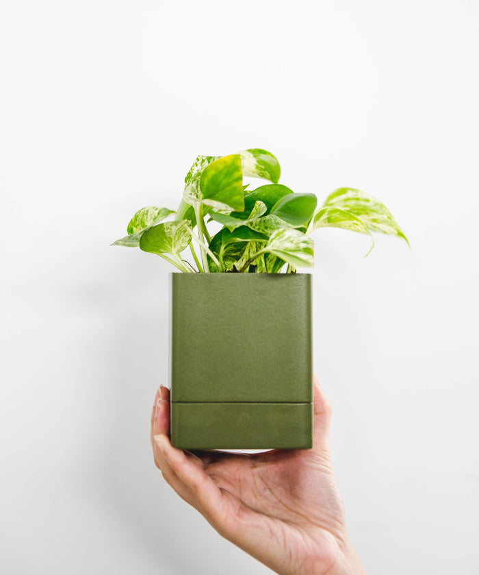 Square Planter -  Federation Green