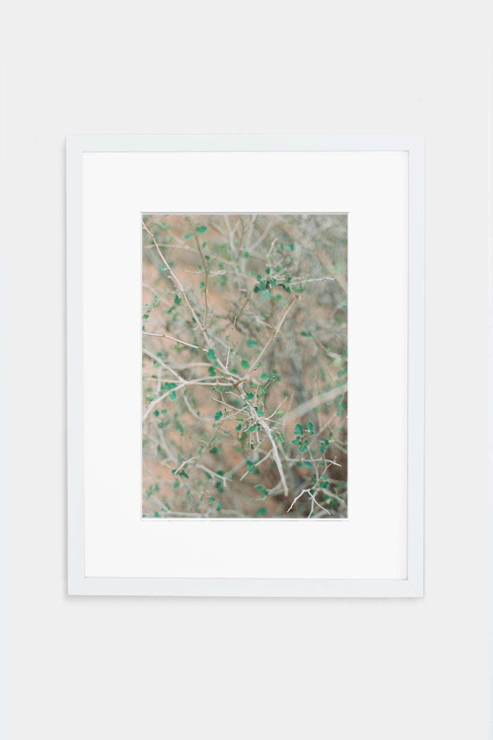 Green Desert Branches