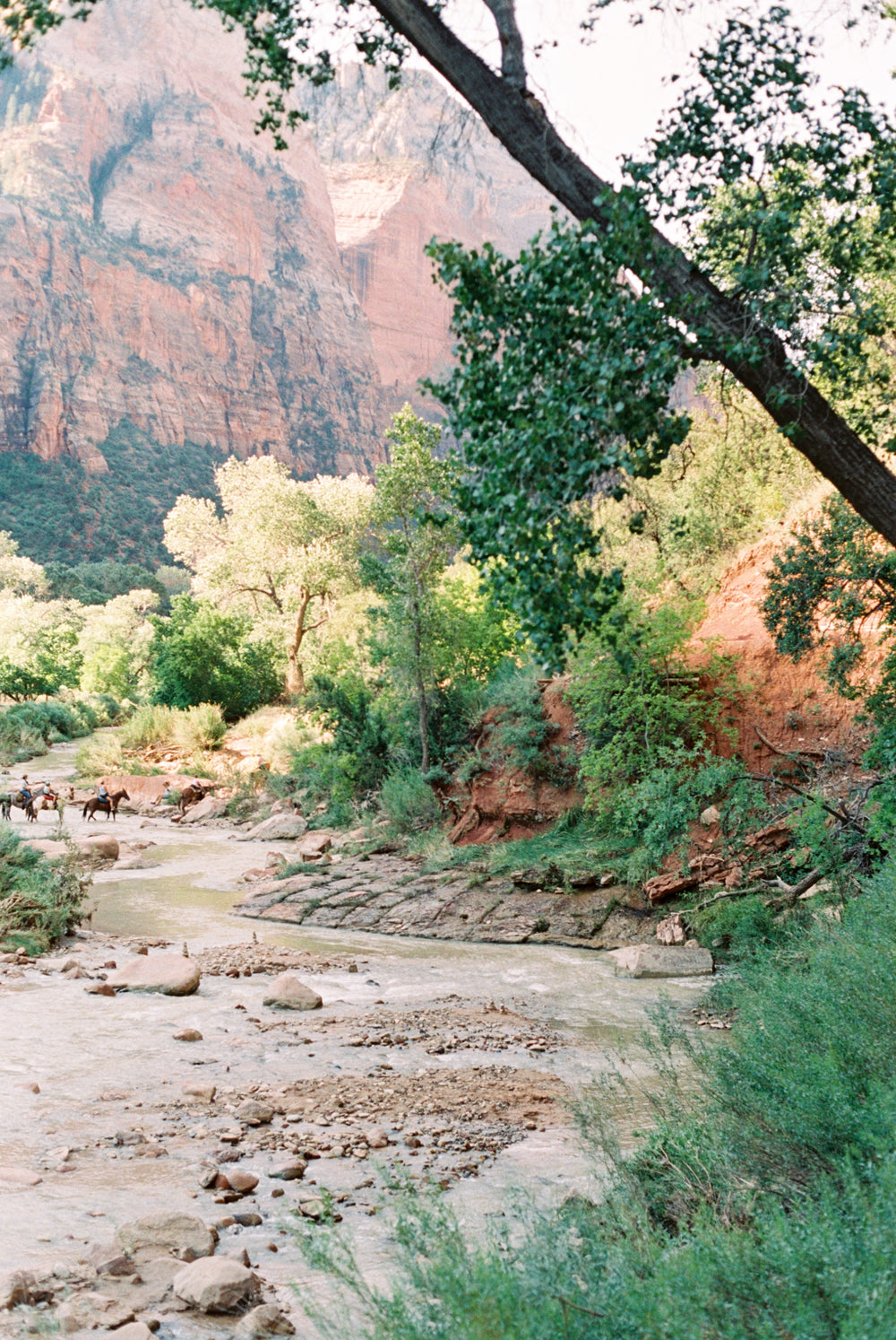 The Winding Virgin River