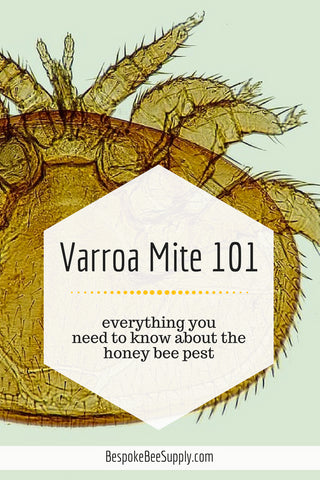 Varroa Mites - How to Deal with Varroa Mites
