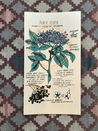Black Elder Herb Print