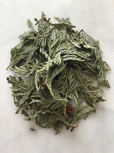 Wildcrafted Cedar Leaf