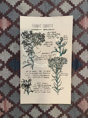 Rabbit Tobacco Herb Print