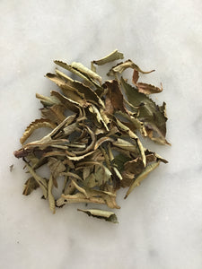Wild crafted Yerba Santa