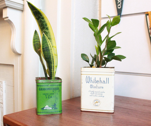DIY: How to Turn Vintage Tins Into Planters