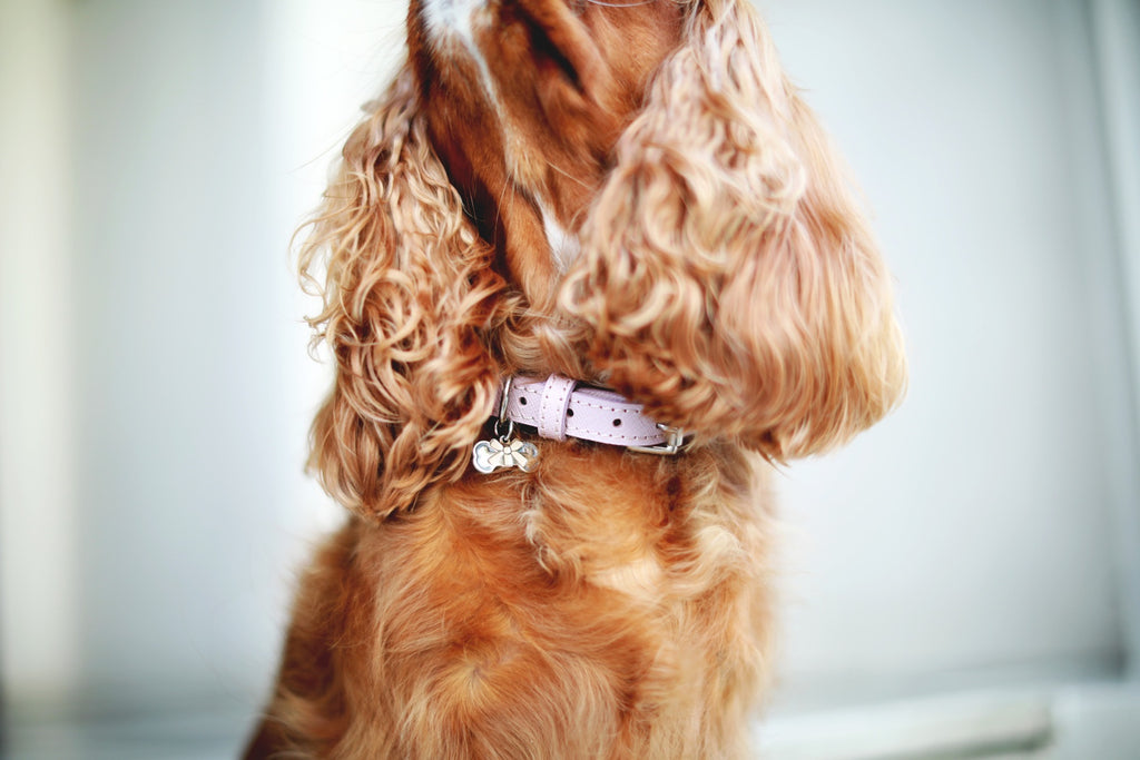 Introducing... A sophisticated collection of leather collars and leads