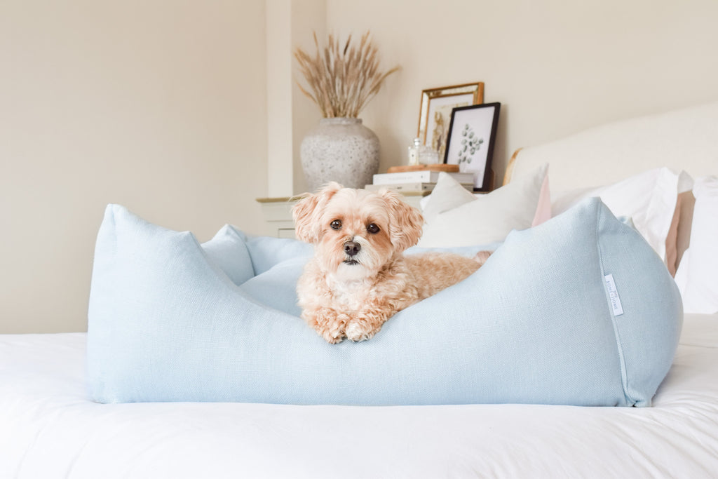 "alt= ""Linen dog bed pictured in home setting with small dog lying down"""