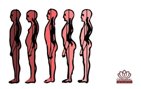 Good Perfect Posture Definition Example Cerebral Body