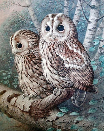 12x16inches The Tawny Owl Square Diamnond Painting