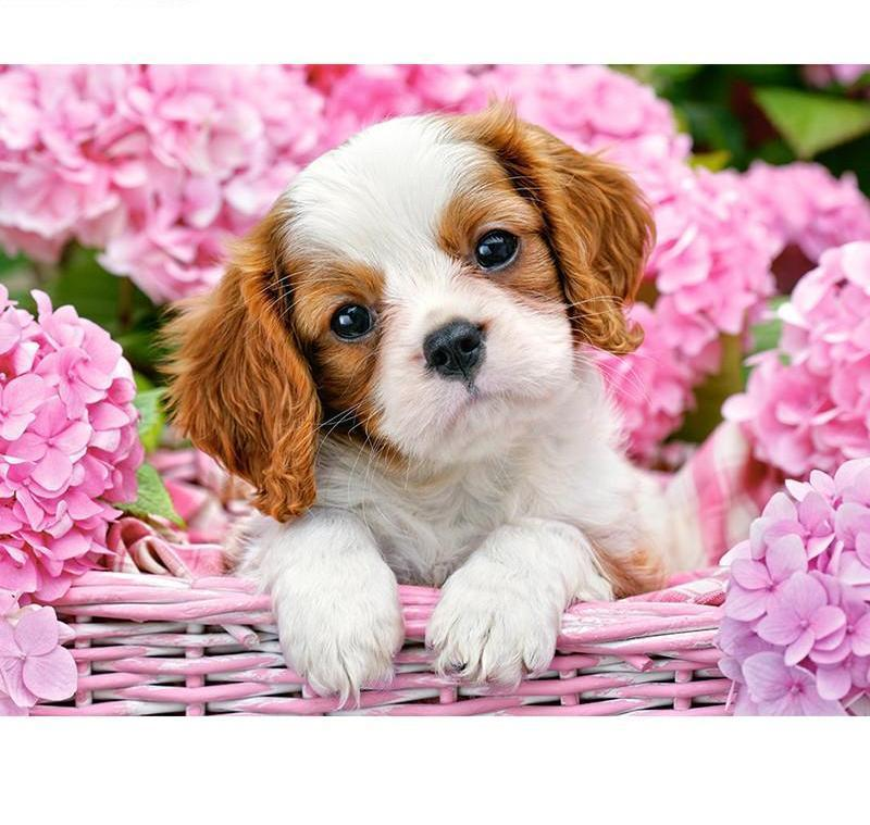 Cute Puppies In Flowers Square Diamond Painting