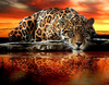"Square Drill 8"" x 12"" (20cm x 30cm)ch Leopard 5D Square Diamond Painting"