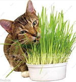 Cat Grass Seeds Triticum Aestivum Small Catnip Seeds Bonsai 100 PCS/bag