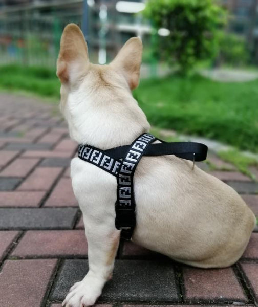 Pendi Silver Leash & Harness