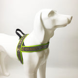 Chewnel Reflective Harness & Leash Set