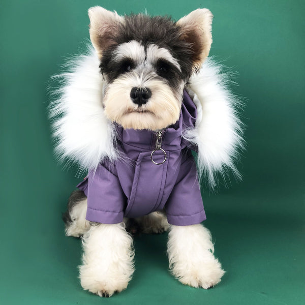 WINTER PET WEAR