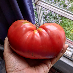 Oneda's German Tomato
