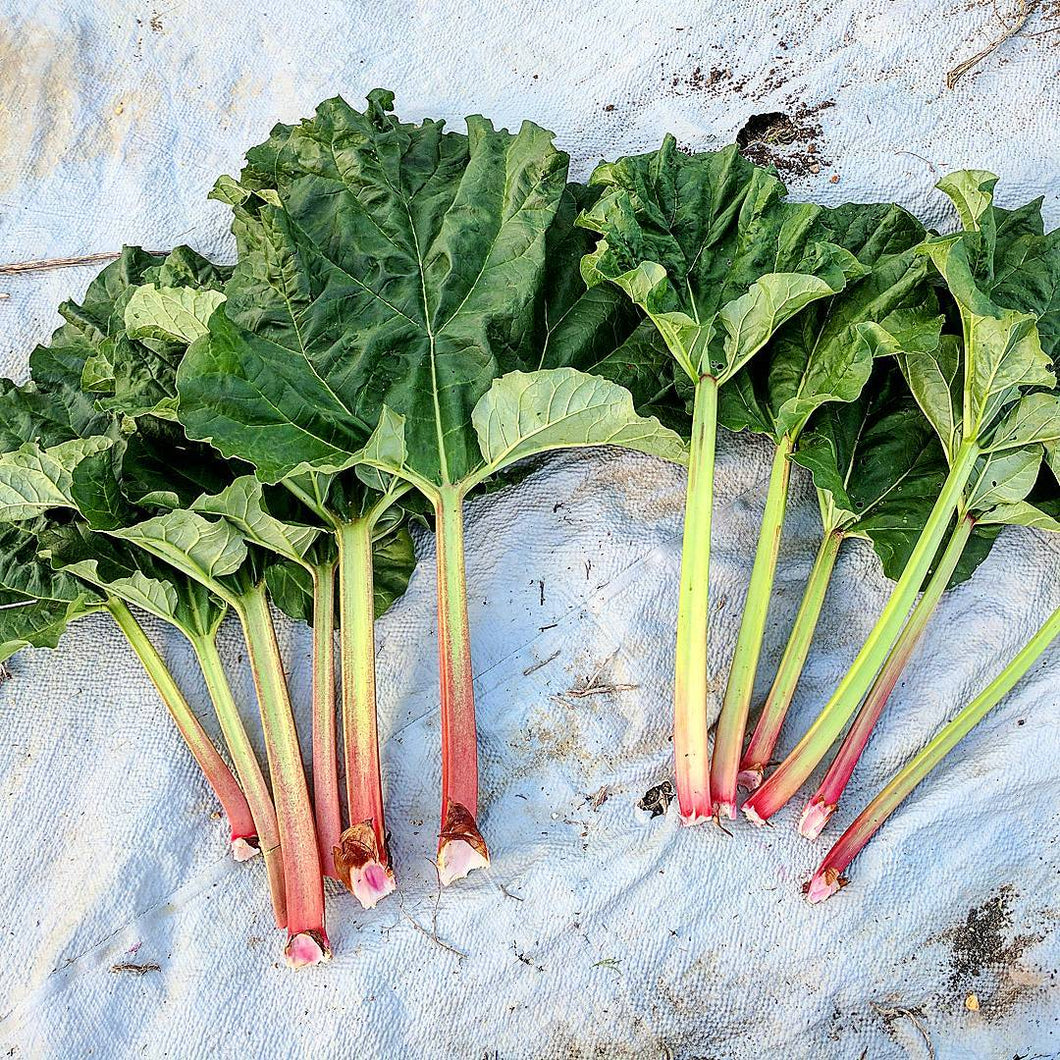 Rhubarb Breeders Mix