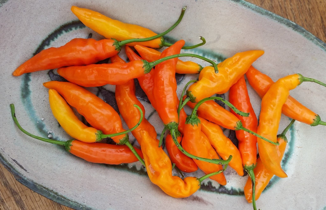 Aji Amarillo Pepper