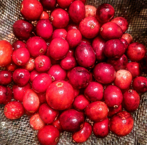 Pine Barrens Cranberry