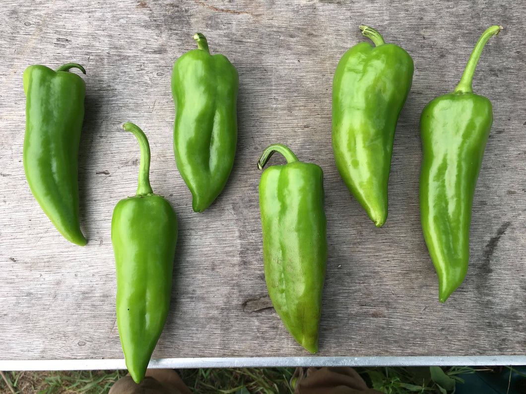 Early Perfect Italian Pepper
