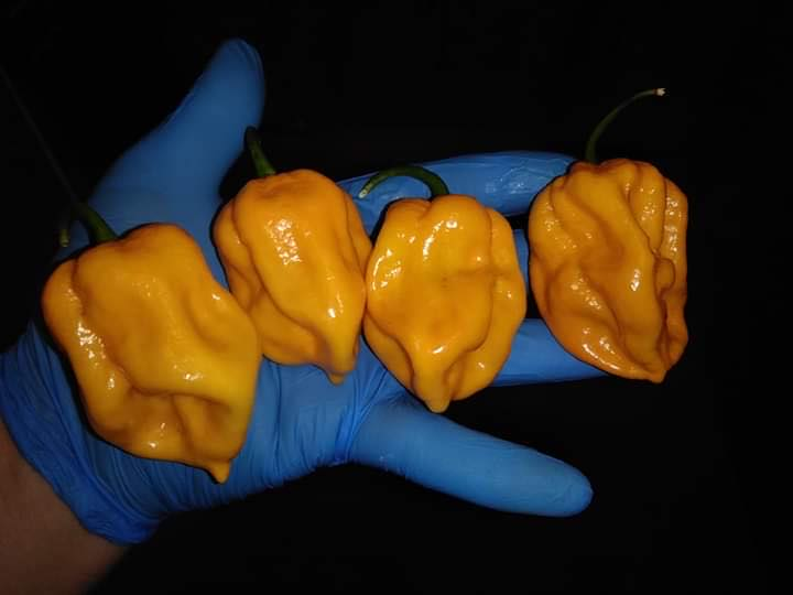 Sabroso Habanero Yellow Pepper