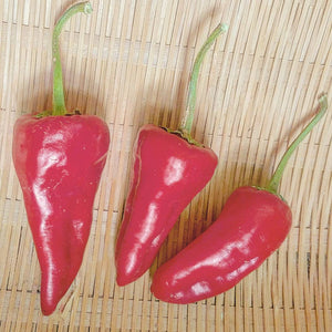 Haskorea Pepper
