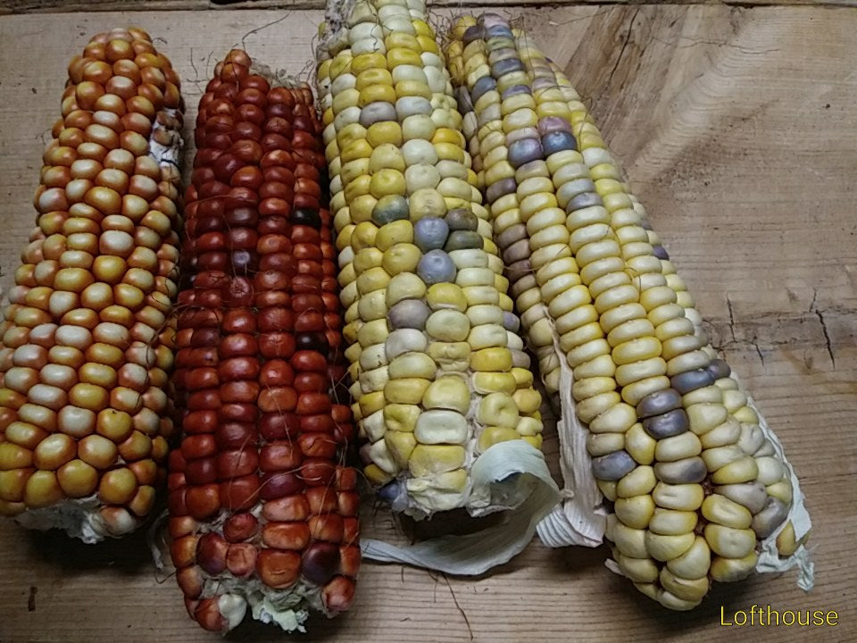 Lofthouse Flour Corn