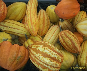 Lofthouse Winter Pepo Squash