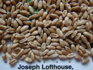 Lofthouse Heritage Wheat