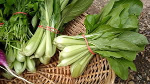Luck Dragon Baby Bok Choi