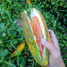 Hithadhoo Maldives Melon