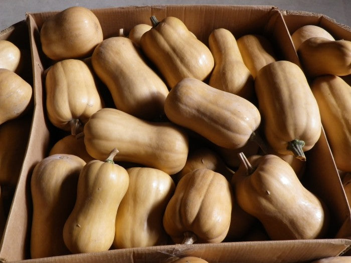 South Anna Butternut Squash
