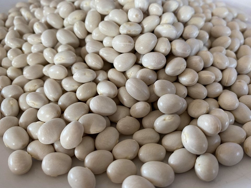 White Marrowfat Bean