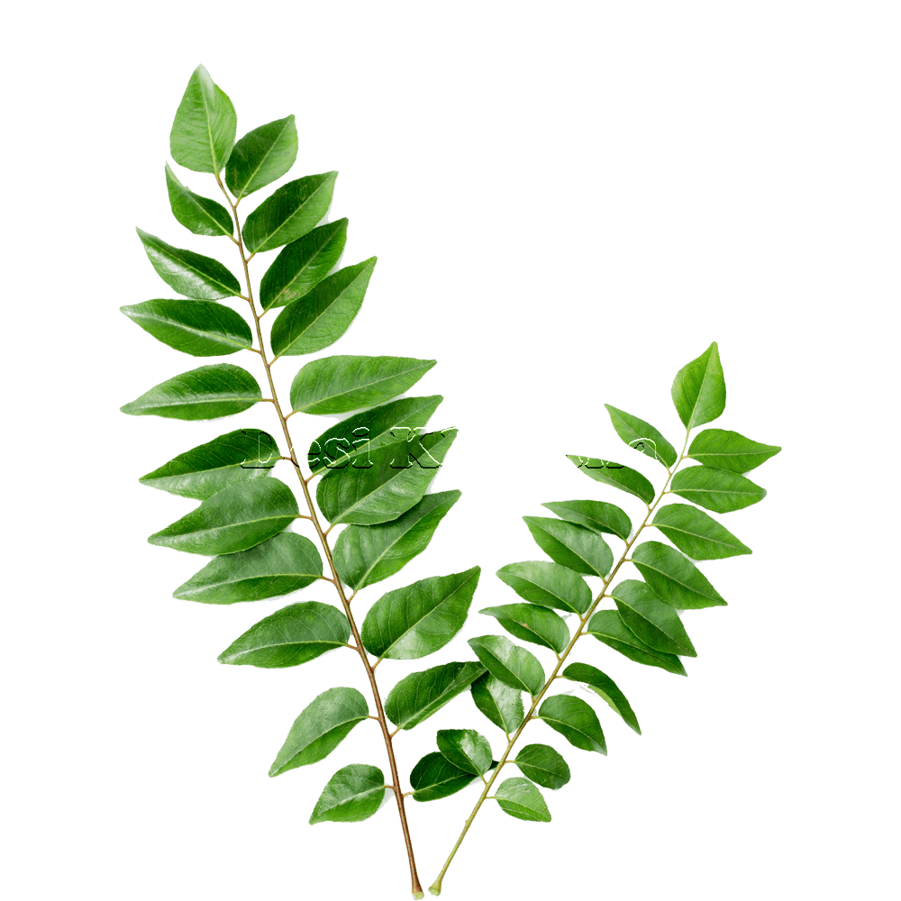 Curry Leaves - Desi Khazana