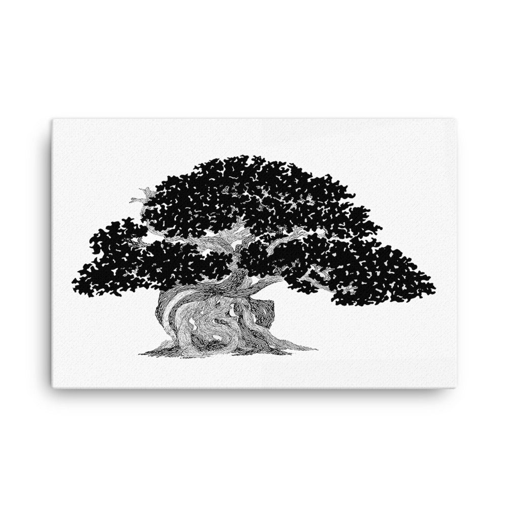 Juniper Bonsai Canvas Print
