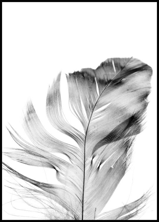 Feather poster in black wooden frame