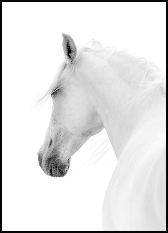 White horse in a black wooden frame
