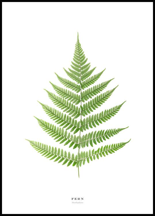 fern poster in black wooden frame